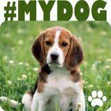 mydog-300x-e30