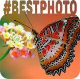 bestphoto-300x-7f7